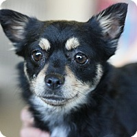 Adopt A Pet :: Mary Jane - Canoga Park, CA