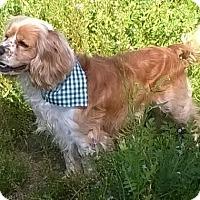 Adopt A Pet :: Toby - Campbell, CA