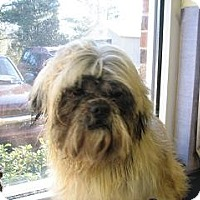 Adopt A Pet :: Ewok - Rock Hill, SC