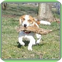 Adopt A Pet :: Winny WaWa - Staunton, VA