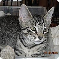 Adopt A Pet :: Mikey - Riverside, RI