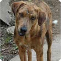 Adopt A Pet :: Blinkin - Flatonia, TX