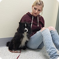 Adopt A Pet :: Petunia - West Deptford, NJ