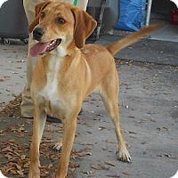 Adopt A Pet :: GINGER - Jacksonville, FL