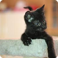 Adopt A Pet :: Angus - Richmond, VA