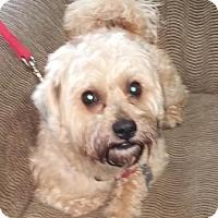 Adopt A Pet :: Kobe - Oberlin, OH
