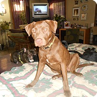 Adopt A Pet :: Roux - North Jackson, OH