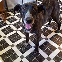 Mountain Cur/Hound (Unknown Type) Mix Dog for adoption in Huntsville, Tennessee - Buddy