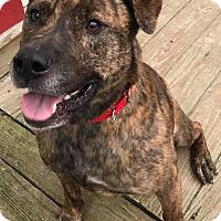 Adopt A Pet :: Smitty - Saranac Lake, NY