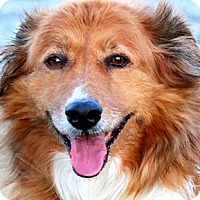 Adopt A Pet :: TOPPER(GENTLE--CALM--SO LOVING - Wakefield, RI