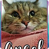 Adopt A Pet :: Angel - Edwards AFB, CA