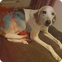 Adopt A Pet :: Maxine - Summerville, SC