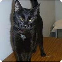 Adopt A Pet :: Chloe Ann - Hamburg, NY