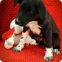 Adopt A Pet :: Stud Monkey - Broomfield, CO