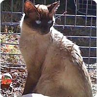 Adopt A Pet :: Mama Kitty - Portland, ME