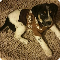 Adopt A Pet :: Corky - Sugarland, TX