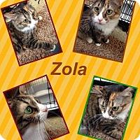 Adopt A Pet :: Zola - McDonough, GA