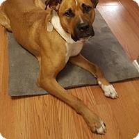 Adopt A Pet :: Kolby - Gig Harbor, WA