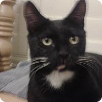 Adopt A Pet :: Mellow Mama Maria - Scottsdale, AZ