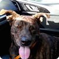 Adopt A Pet :: Anna - Satellite Beach, FL