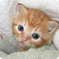 Adopt A Pet :: Addie - Richmond, VA