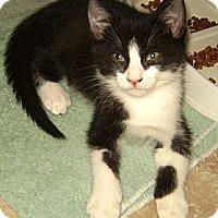 Adopt A Pet :: Sylvester - Delray Beach, FL