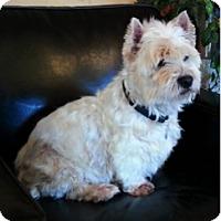 Adopt A Pet :: SCOOTER - GARRETT, IN