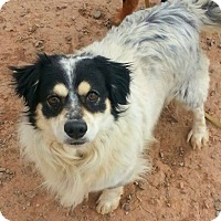 Adopt A Pet :: Bandit - Alamogordo, NM