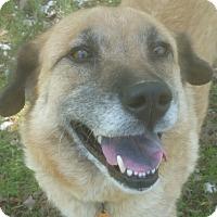 Adopt A Pet :: AVA - Glastonbury, CT