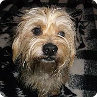 Adopt A Pet :: Rocket - Lawrenceville, GA