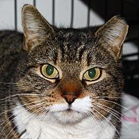 Adopt A Pet :: Cassie - North Branford, CT