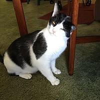 Adopt A Pet :: CiCi - Philadelphia, PA