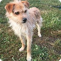 Adopt A Pet :: C.j - Tumwater, WA