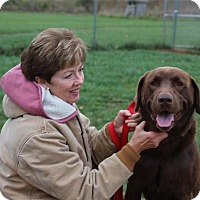 Adopt A Pet :: Buckeye-Prison Graduate - Elyria, OH
