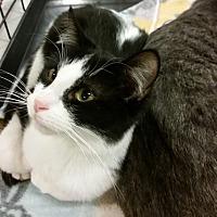 Adopt A Pet :: Upton - Toledo, OH