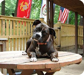 Boxer Mix Dog for adoption in Columbia, Maryland - Morgan