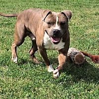 Adopt A Pet :: Obi - Hearne, TX