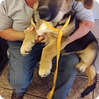 Adopt A Pet :: UJ - Newport, KY