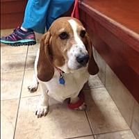 Adopt A Pet :: Delilah - Barrington, IL