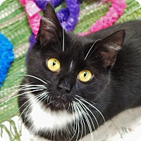Adopt A Pet :: Orca - Chambersburg, PA