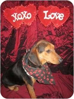 Terrier (Unknown Type, Medium) Mix Puppy for adoption in Cincinnati, Ohio - Maxwell