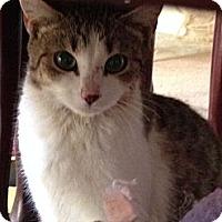 Adopt A Pet :: Pixie - Monroe, GA
