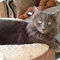 Adopt A Pet :: Kia - Anchorage, AK