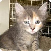 Adopt A Pet :: Serenity - Dallas, TX