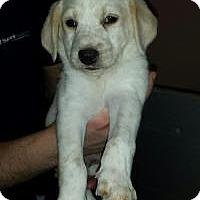 Adopt A Pet :: Baby Charlotte - Marlton, NJ