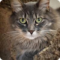 Adopt A Pet :: Orphie - Byron Center, MI