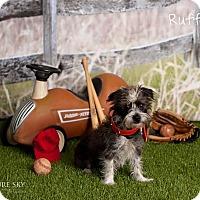 Adopt A Pet :: Ruffy - Scottsdale, AZ