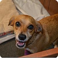 Adopt A Pet :: Penny - Tavares, FL