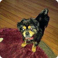 Adopt A Pet :: Garcie - LAKEWOOD, CA