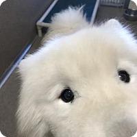 Adopt A Pet :: Buck - E. Brookfield, MA